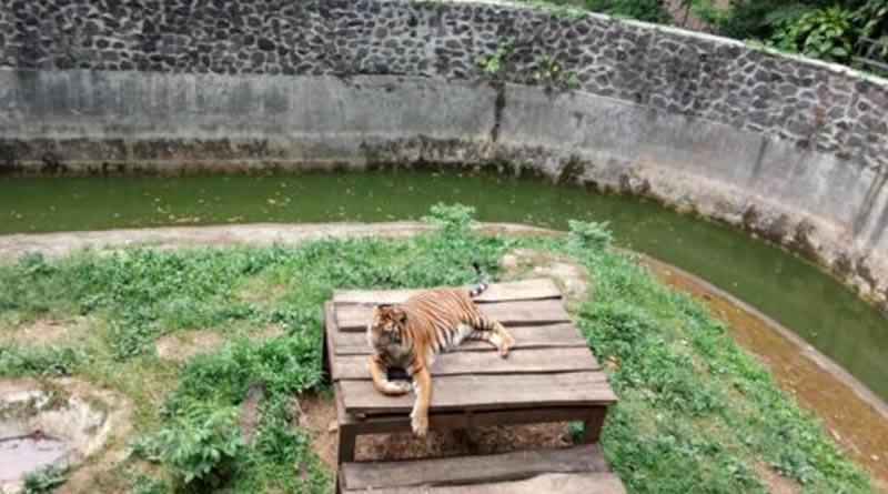 Menteri LHK: Kelola Kebun Binatang Harus Tahu Satwa dan Manejemen Usaha