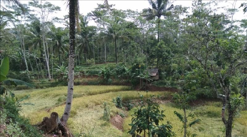 """Obsesi Desa Parakanhonje Bantarkalong Tasikmalaya Wujudkan """"Desa Seribu Domba"""""""