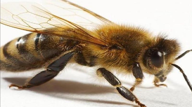 Pasca  2 Tewas dan 10 Mengalami Luka, Pemdes Dirgahayu Datangkan Pawang untuk Usir Lebah
