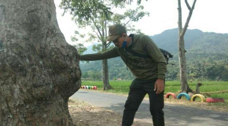 """""""Pohon Tunggal"""" Ikon Lain Desa Nanggewer"""
