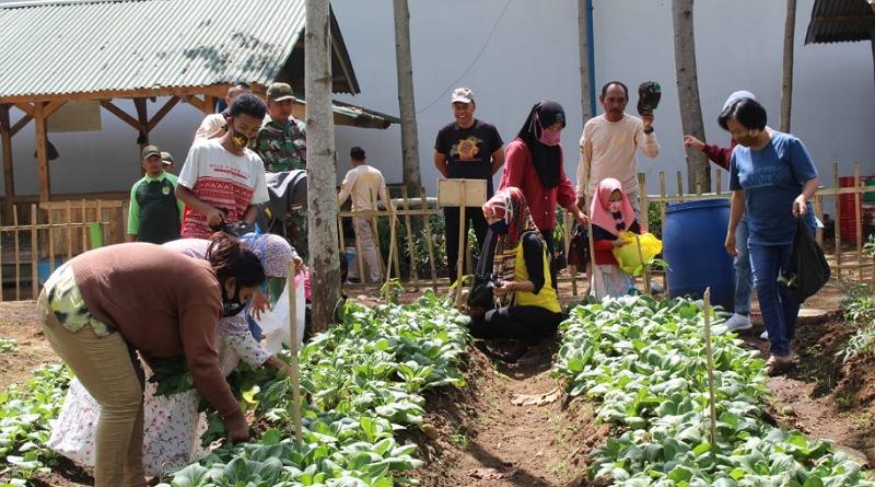 Warga Nikmati Panen Pakcoy dan Kangkung di Lokasi Pembibitan Satgas Citarum Harum